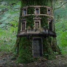 The Termite Trolls carved out a new home in the forest.  -  tree house .... SO Blooming Amaz-zing !