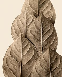 I don't know what exactly it is about this that draws me in, but I absolutely LOVE it!    leaf art warm autumn earth tones  Monument 8 by ForestFloorPrints, $20.00
