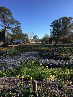 Floriade - the 2014 theme is 'Passion.'  So much fun finding each new area and how it reflected passion.