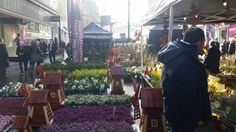 Sheffield Continental Market: 2nd - 6th march 2016