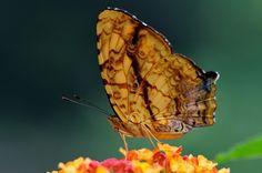 Beautiful Butterfly | www.way2faisal.tk