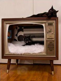 Оригинал взят у julianna_hor13 в Кот и среда обитания. Это подборка предназначена для тех, кто имеет дома пушистого хищника – кота. Хочу показать как в разных странах…
