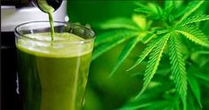 Crazy Health Benefits of Juicing Raw Cannabis - #MMJ #Edibles - http://marijuanaworldnews.com/crazy-health-benefits-of-juicing-raw-cannabis/