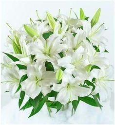 Buy Lilies Flowers Starting At Rs.1,100 at Gifts n Flowers