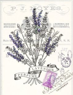 Botanical Lavender Perfume Print, Pillow, Note Cards is part of Lavender perfume - Original artwork created from vintage bookplates, etchings & papers Printed in the USA on handcrafted paper Vintage Diy, Vintage Labels, Vintage Shoes, Vintage Artwork, Vintage Prints, Do It Yourself Vintage, Industrial Wall Art, Botanical Illustration, Botanical Prints