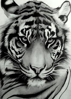 Draw Tigers My tattoo ~ Sumatran Tiger by ~artistelllie - Animal Drawings, Art Drawings, Drawing Art, Drawing Ideas, Drawing Animals, Drawings Of Tigers, Art Sketches, Drawing Poses, Art Tigre