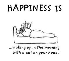 Happiness is waking up in the morning with a cat on your head.