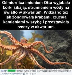 I love that octopus, what a mood Funny Memes, Hilarious, Jokes, Google Facts, Avatar Ang, Cute Funny Animals, Ocean Life, Really Funny, Make You Smile