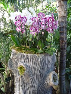 Gerbe de phalaenopsis pourpres et blancs  Une belle composition de potées de Phalaenopsis blancs purs à l'arrière, pourpres et blancs à l'avant, posés sur un tronc en rocaille. À découvrir dans l'exposition Mille et une orchidées que vous pouvez admirer dans la grande serre tropicale du Jardin des Plantes (Paris 5e).  http://www.pariscotejardin.fr/2013/02/gerbe-de-phalaenopsis-pourpre-et-blanc/