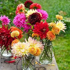 Flowers: How to Grow, Cut, and Arrange Them Learn what you need to know to enjoy beautiful dahlia flowers.Learn what you need to know to enjoy beautiful dahlia flowers. Cut Flowers, Fresh Flowers, Colorful Flowers, Beautiful Flowers, Dahlia Flowers, Dahlia Bouquet, Rare Flowers, Cut Flower Garden, Flower Farm