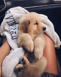 The most adorable golden retriever puppy going home for the first time. Super Cute Puppies, Cute Baby Dogs, Cute Little Puppies, Cute Dogs And Puppies, Cute Little Animals, Cute Funny Animals, Doggies, Cutest Dogs, Adorable Dogs