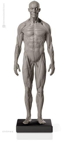 Male 1:6 Anatomy fig v.2