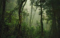Mount Kinabalu Climb, Borneo / Lonely Planet