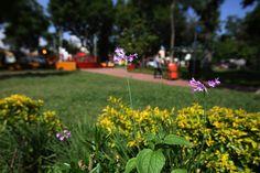 El Ayuntamiento de EGuadalajara, invertirá en la rehabilitación general del parque en dos etapas, con una inversión de casi 29 millones de pesos.