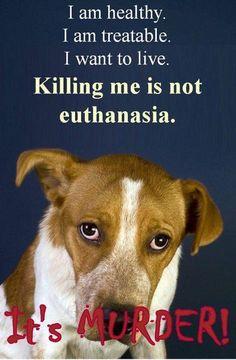 No Kill Shelters for USA, please!!!