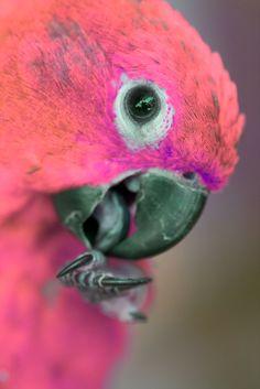 pretty bird. pink.