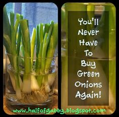 HALF OF GABBY: How to Lose Weight & Get Fit: Grow Green Onions in Water!