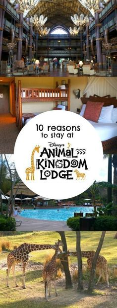 10 Reasons to stay at Disney's Animal Kingdom Lodge, the best Disney World resort. Love it here!