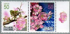 2006年河津桜