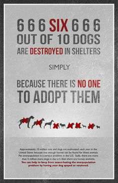 PLEASE Spay and Neuter your pets!! Also, adopt from a shelter! There are plenty of purebred shelters and rescues if you absolutely have to have one.