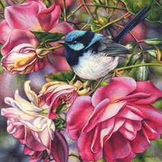 Blue Wren and Roses continues my highly popular miniatures series of sentimental garden favourites, small birds and exquisite small works in watercolour