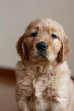 Dog? Or teddy bear?