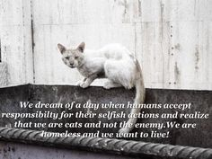 Untitled Feral Cats Cats Cat Quotes