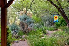 Tucson Botanical Gardens Tucson Arizona