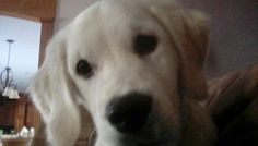 This is my puppy Harley,  he is so cute!!!