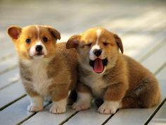 We're corgis not yawnies so be your own kind