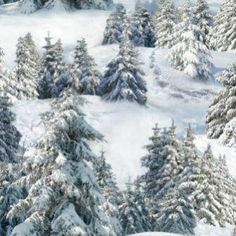 fabric - Snowy Pine Tree Fabric by Elizabeth's Studio Wonderful wintry landscape fabric with snow-covered evergreens. From the North American Wildlife fabric collection. Snowy Forest, Snowy Trees, Winter Trees, Water Pond, Lake Water, Dark & Stormy, Blue Sky Clouds, Pocono Mountains, Snow Covered Trees