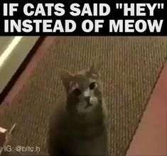Unmute For Maximum Pleasure Animal Gifs) - World's largest collection of cat memes and other animals Funny Cute Cats, Funny Animal Jokes, Really Funny Memes, Funny Animal Videos, Cute Funny Animals, Funny Animal Pictures, Cute Baby Animals, Haha Funny, Funny Cats