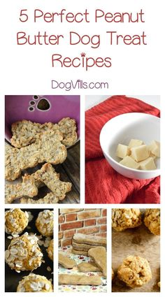 Homemade Dog Food Looking for yummy homemade peanut butter dog treat recipes? Check out 5 of our favorites! - All About Dogs Homemade Peanut Butter Dog Treats Recipe, Homemade Dog Treats, Healthy Dog Treats, Pet Treats, Dog Biscuit Recipes, Dog Treat Recipes, Dog Food Recipes, Family Recipes, Puppy Food