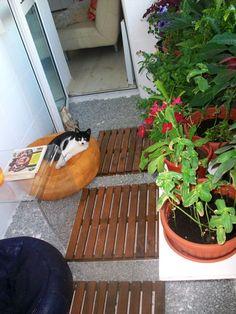 ... balcon?plantes et paravents en bambou plus intimite Zen et Design
