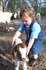 NSW Farmstay - Kookaburra Cottages and Farmhouse - Port Stephens - NSW Daily Farm, Next Us, Farm Stay, School Holidays, Newcastle, Cottages, Cuddling, Farmhouse, Animals