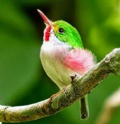 Type 1's bird is a hummingbird. The are birds that flit around quickly, quite like most Type 1 women. They are very colorful in happy, bright tones, which are usually colors that Type 1's really love. They also are the only birds that can fly backwards.