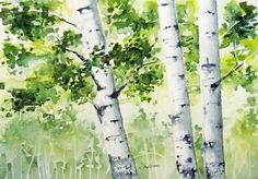 Birch Trees in Spring Original  Watercolor for Sale 5 by 6catsart, $43.95