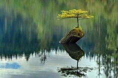 """""""Laisser vivre et grandir un arbre vert dans votre cœur. Un oiseau viendra sûrement y chanter..."""" Proverbe chinois"""