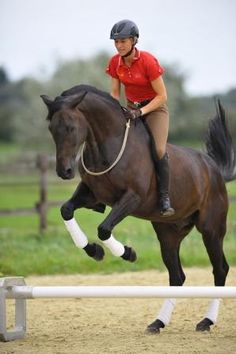 """Ingrid Klimke and """"Braxxi"""" ^^ The correct way of training a top-sport horse! Build a bond, work on from there! Amazing"""