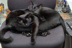 Faulker and Miss Tea used to sleep like this. :)