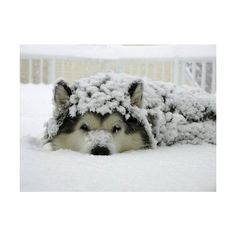 snow | Tumblr ❤ liked on Polyvore featuring animals, backgrounds, pictures, winter and photos