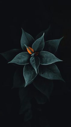 25 Best Ideas For Flowers Black Background Photography Beauty Leaves Wallpaper Iphone, Whats Wallpaper, Wallpaper Iphone Cute, Flower Wallpaper, Nature Wallpaper, Mobile Wallpaper, Wallpaper Keren, Landscape Wallpaper, Animal Wallpaper