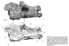 """This freaky lizard lived in an isolated desert 250 million years ago . As for Bunostegos, it's name means """"kobby [skull] roof."""" It was a cow-sized, plant eating reptile with a bumpy skull and bony armor down its back. Its features suggest that it was more closely related to older and more primitive pareiasaurs, leading to the conclusion that its genealogical lineage was isolated for millions of years. That, or its features were the result of convergent evolution."""