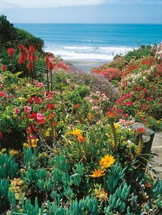Credit: DK - Learn to Garden © 2008 Dorling Kindersley Limited    For the most beautiful and least time-consuming garden, coastal gardeners choose a variety of vigorous perennials that can handle sun, heat, wind and salt.