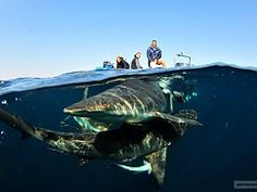 View our list of scuba diving operators in South Africa - Dirty Boots Adventure Activities, Adventure Tours, Shark Diving, Scuba Diving, Tsitsikamma National Park, Wildlife Safari, Whitewater Kayaking, Paragliding, South Africa