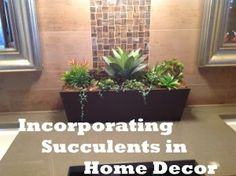 Incorporating Succulents in Your Decor