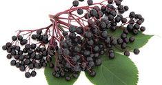 "Extra ""Bazový extrakt"" na chrípku Healing Herbs, Holistic Healing, Dr Sebi Herbs, Organic, Fruit, Collection, Tips, Photos, Products"