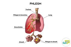 -How to Get Rid of Phlegm and Mucus in Chest & Throat (Instant Result) - Healthy Mates Ideas Flu Remedies, Health Remedies, Natural Remedies, Getting Rid Of Phlegm, Kids Cough, Tonic Drink, Hard Breathing, Nasal Passages, Medicine Journal
