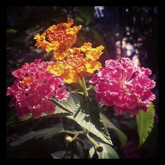 Photo by aliciuga • Instagram  #fiori
