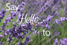 This Country Girl's Journal: Say Hello to... | New monthly Blog series!